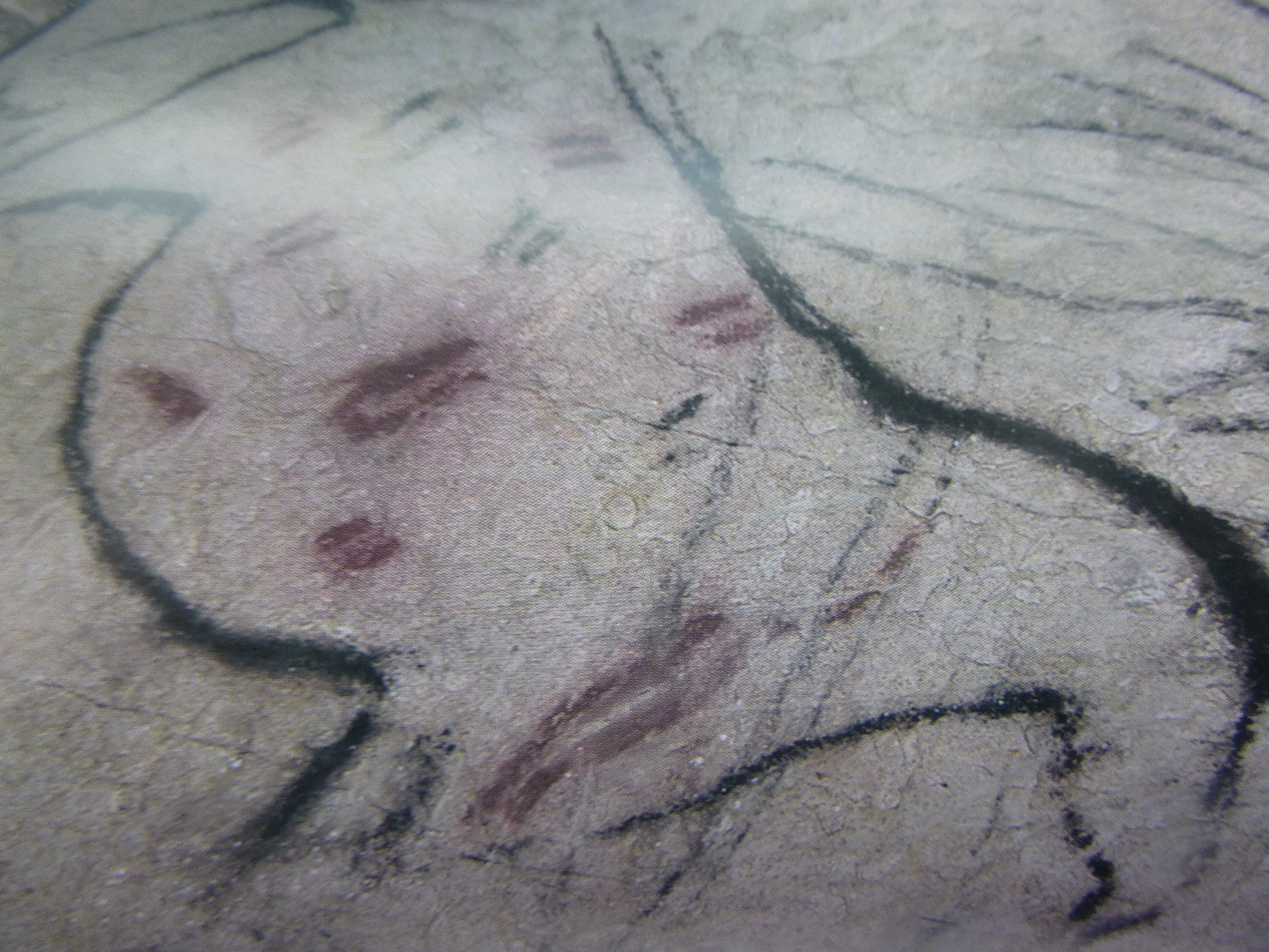 Cave Paintings 22,000 years old